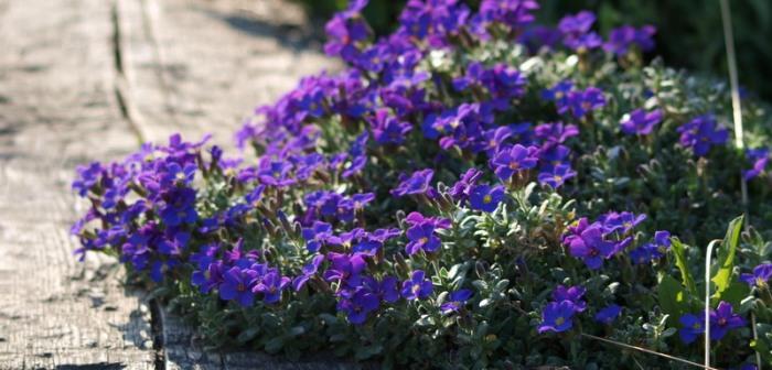 Vår i vår trädgård